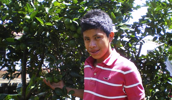 Citrus Tree Project